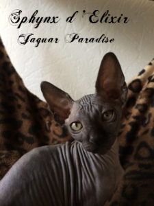 jaguar 1072