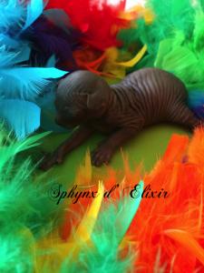 Maupiti bébé noir